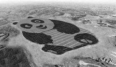 """世界上最萌的光伏电站:一只占地1500亩的""""大熊猫"""""""