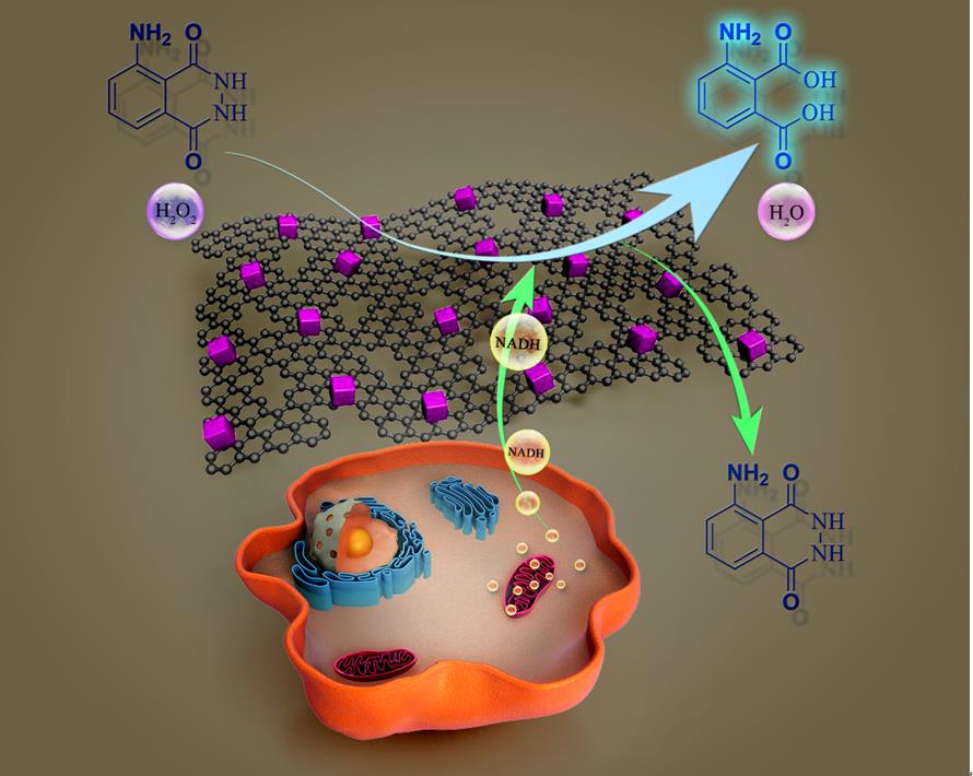 多孔石墨烯/氧化亚铜复合材料用于NADH的检测