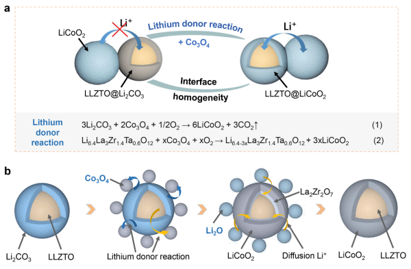 (a)锂供体反应技术示意图;(b)LLZTO表面Li2CO3向LiCoO2转化过程示意图
