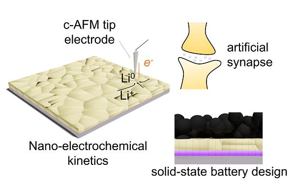 阻断锂枝晶生长 深圳先进院固态电池研究获进展